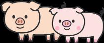 養豚部からのお願い